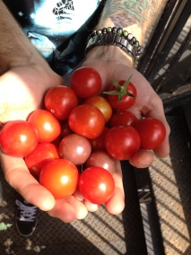 *Some* of our tomato bounty! We we're hooked for life!