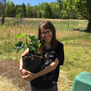 4.14.16 Brought my first fig tree home! Named the tree Chia - it's an Ischia Fig Tree.