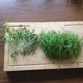 One of my microgreen harvests!