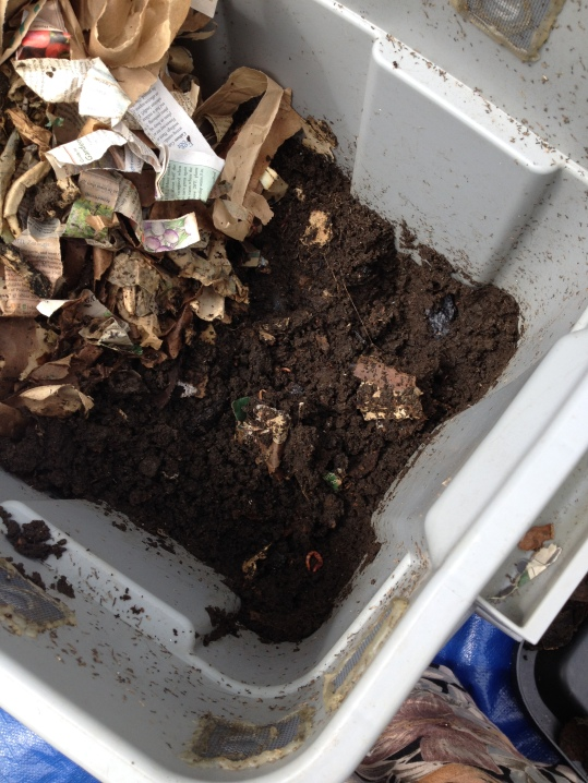 A view of the worm bin before I dumpted it.