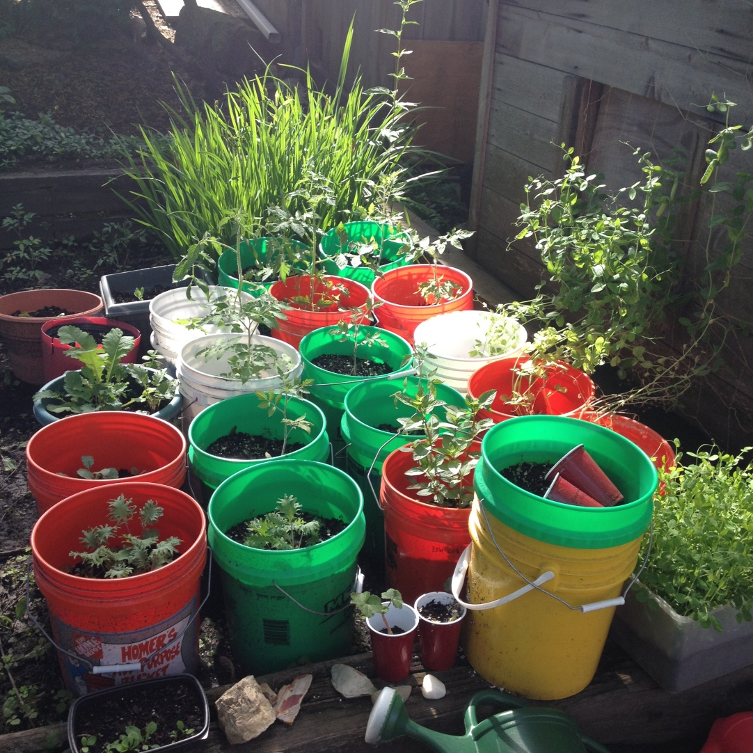A view of our container garden!
