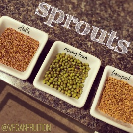 3.20.16 SPROUTS!