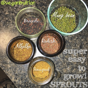 4.2.16 I had fun making this picture! All of these sprouts ARE super easy to grow!