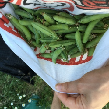 Yet even more speckled peas!