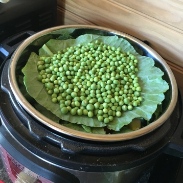Speckled peas getting steamed up for dinner!